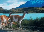 Learn Spanish in Santiago de Chile